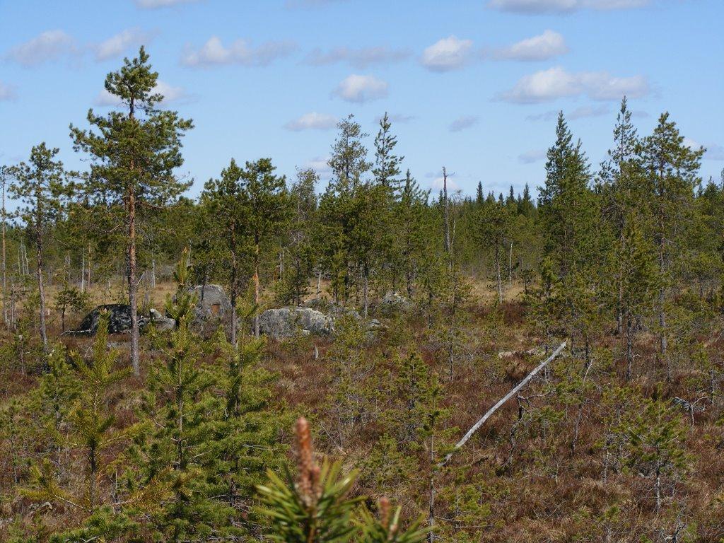 Kallioperäkartoitus 2009 - DSCF1323.JPG