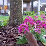 Gardening 2012 - 115_1284.JPG