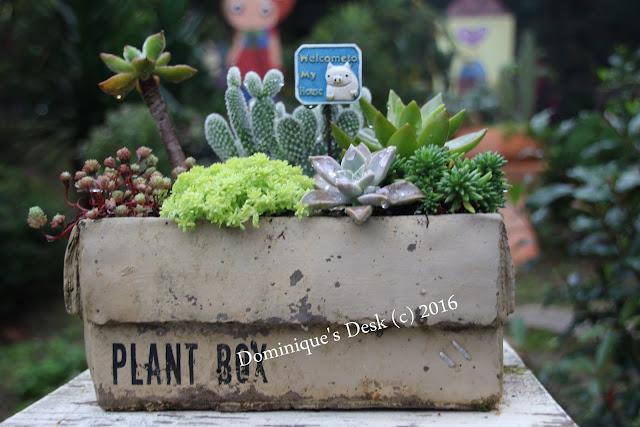 Cactus box planter