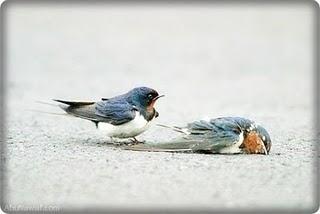 Ini Ikram Kamsaini Aku Hanya Seekor Burung Yang Patah Sayapnya