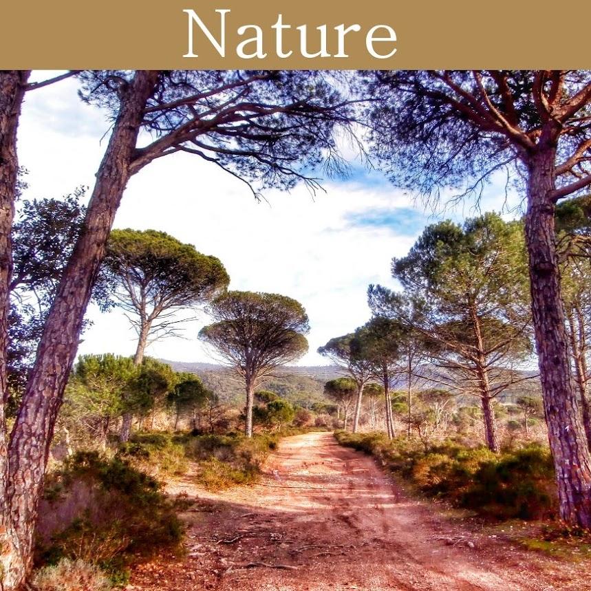 nature-patrimoine-naturel_de_la_dracenie_dans_le_var_et_en_provence