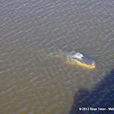 04-06-12 Myaka River State Park - IMGP9876.JPG