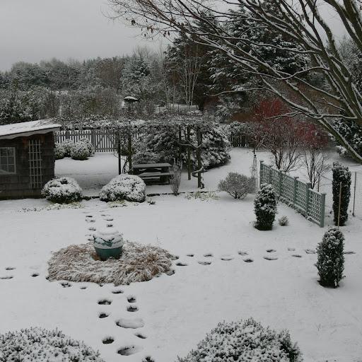 Snow decorates the garden in winter.