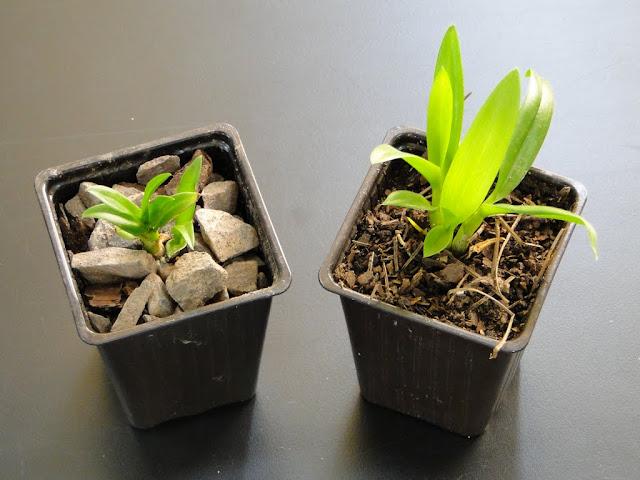 orquidea - DSC02952.JPG