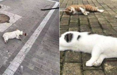 MIRIS! Takut Terkena Virus Corona, Warga China Tega Lempar Kucingnya dari Apartemen
