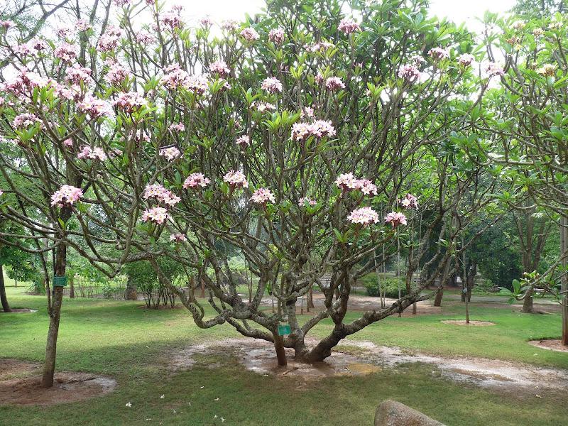 Chine .Yunnan . Lac au sud de Kunming ,Jinghong xishangbanna,+ grand jardin botanique, de Chine +j - Picture1%2B673.jpg