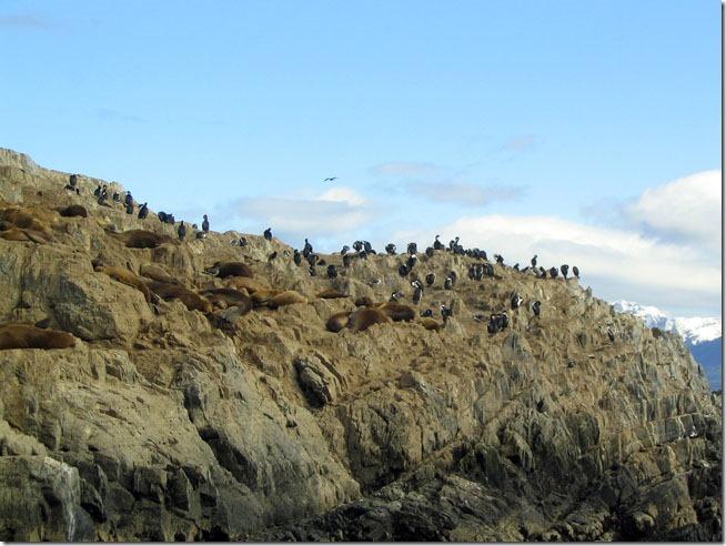 Ushuaia_ilha-dos-lobos-1