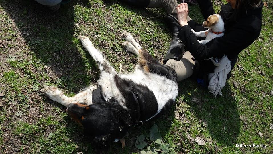 Balades canines en Nord (59)/Pas de Calais (62) - Boulogne-sur-Mer, Calais et Lille - Page 4 DSC01915