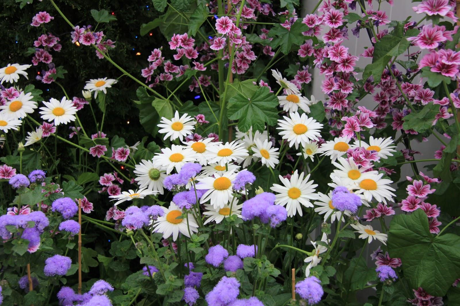 Gardening And Gardens Hicks Nursery Flower Garden Show