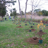 Hammo Planting - Shannon Schiesser - IMG_4878.JPG