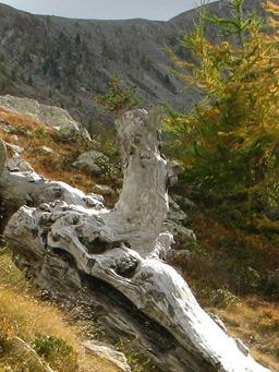 Alpine Trekking 20