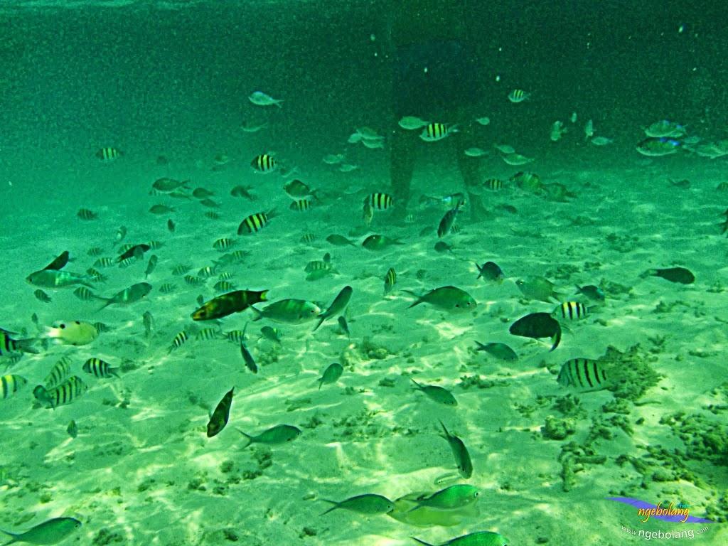 ngebolang-trip-pulau-harapan-olym-7-8-09-2013-02