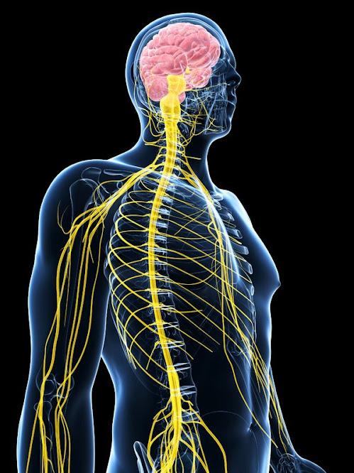 「神經」的圖片搜尋結果