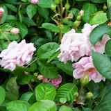 Gardening 2014 - 116_1504.JPG