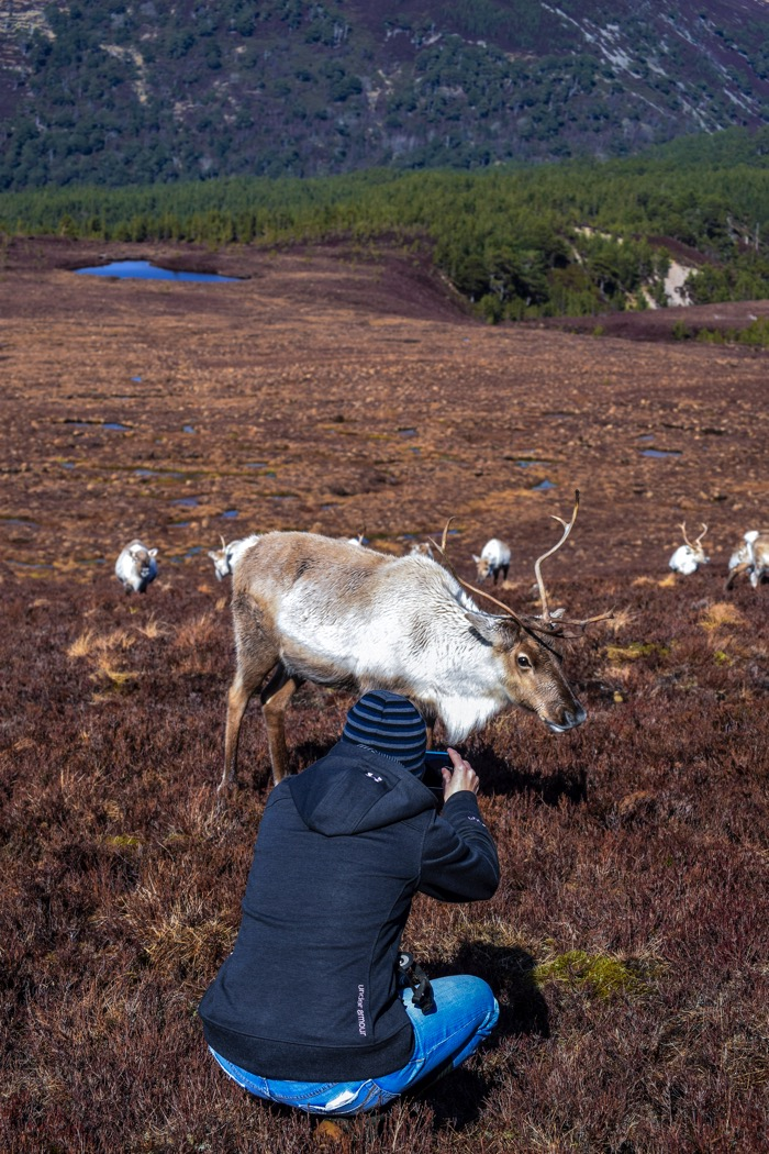 Reindeer posing for a picture