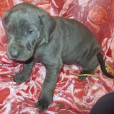 Hauss @ 5 weeks