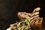 LUMIERE SUR LA VIPERE   Ce reptile omniprésent et pourtant très discret !