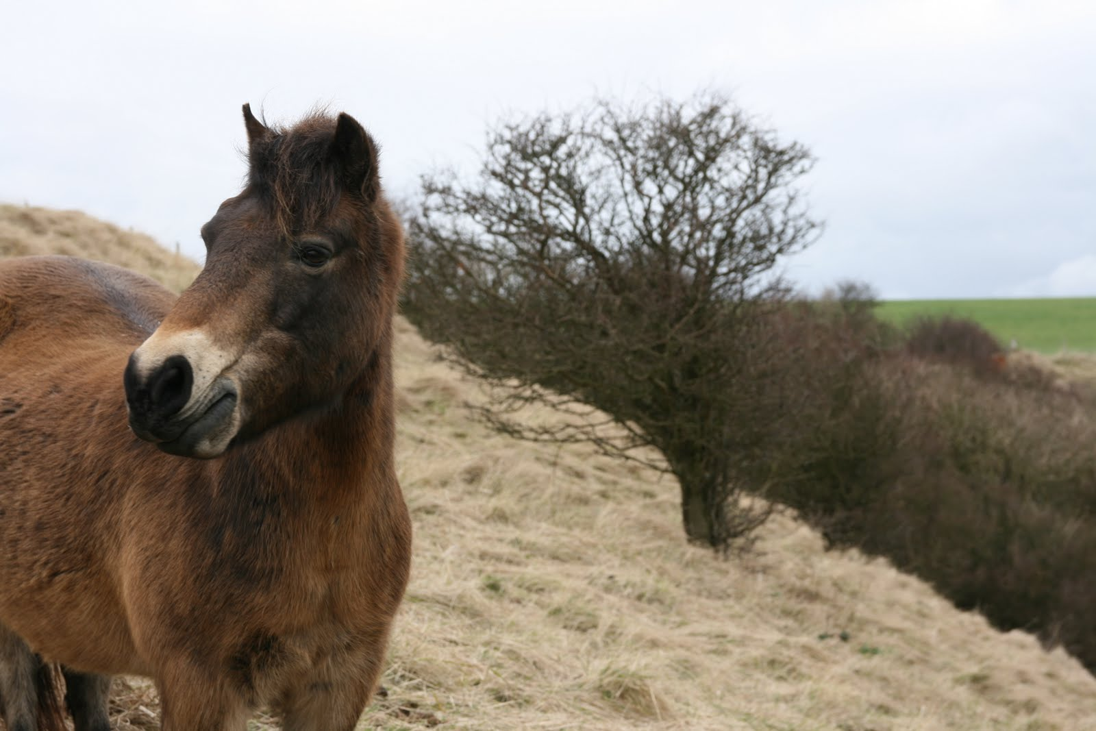 0903 032 Dover, England Horse in a field