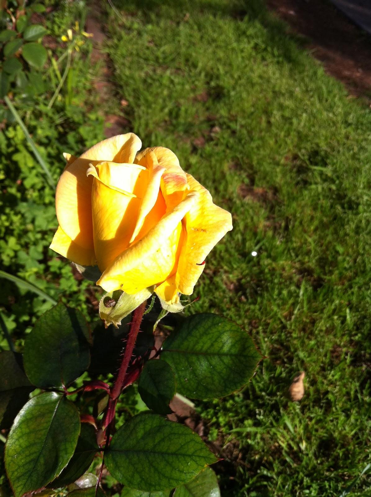 Fifi Flowers Outdoor Flower Series Week 5
