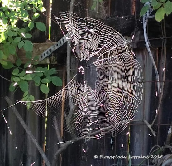 [02-22-spider-web%5B4%5D]