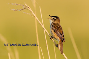 Rietzanger Ezumakeeg - Lauwersmeer (17).jpg