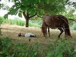 Pony mit Fohlen