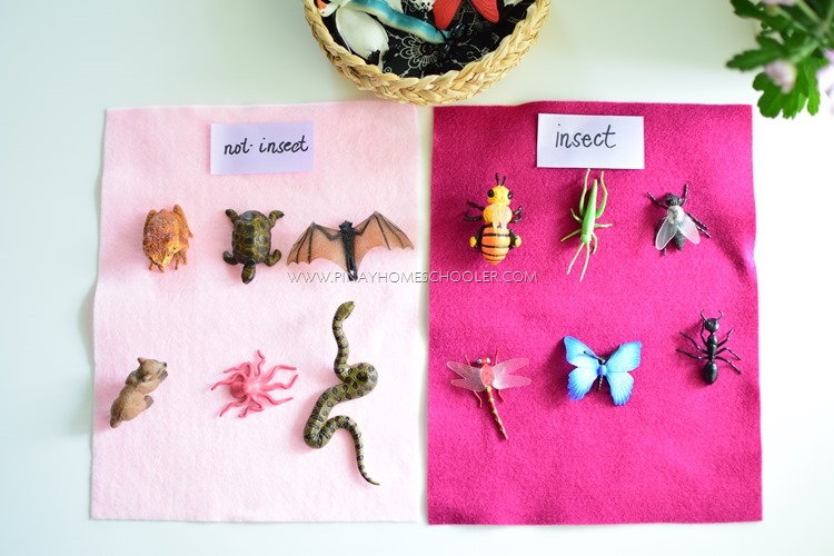 Sorting insects from other types of animals