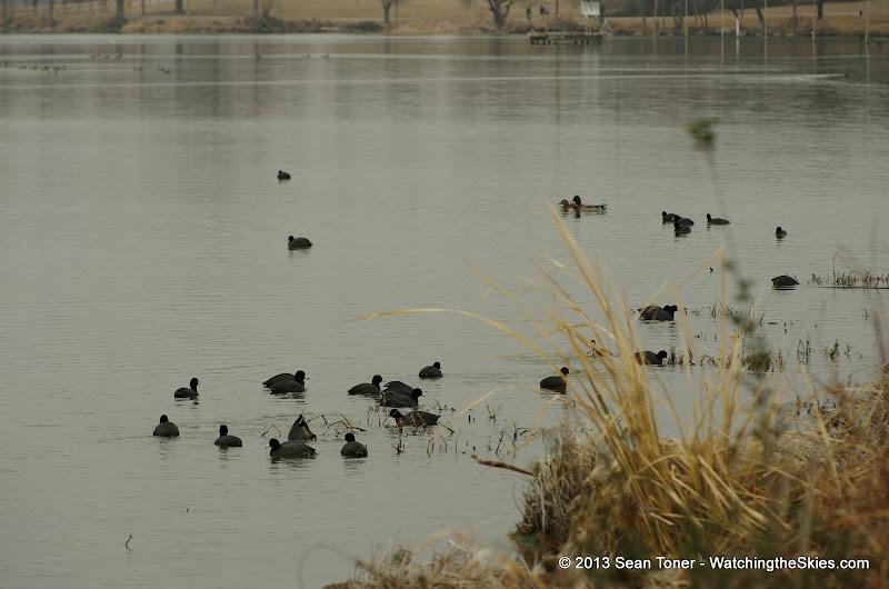 01-26-13 White Rock Lake - IMGP4337.JPG