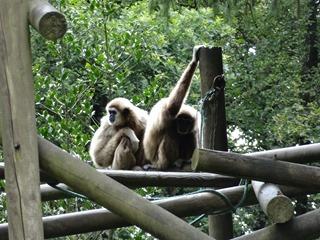 2016.07.31-042 gibbons lars