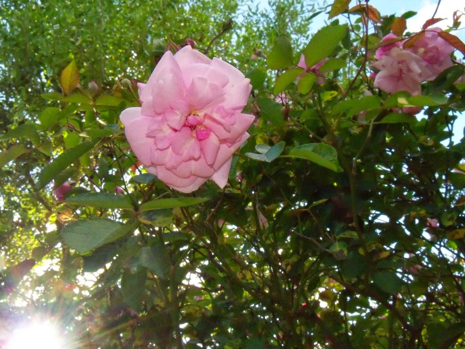 Gardening 2015 - 116_7647.JPG
