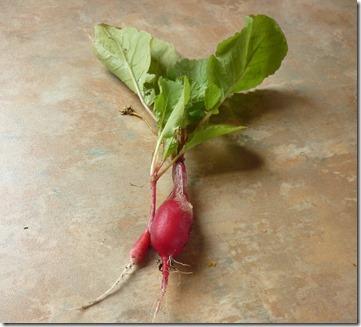 12 boat radishes