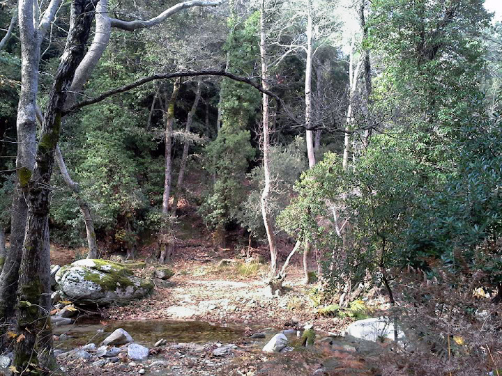 The woods and the river inside the ravine of Myrsonas in Ikaria