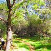 laguna_coast_wilderness_IMG_2230.jpg