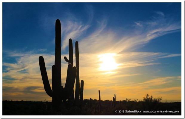 151230_Tucson_Saguaro-NP-East_0056