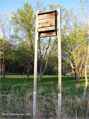 A bat duplex in a park setting. Notice the metal wrapped around the pole as a predator guard.