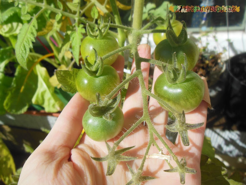 My balcony urban vegetable garden July 2015 in Brussels