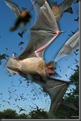 Bat Removal Ontario