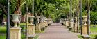 Camino interno en Parque Lezama