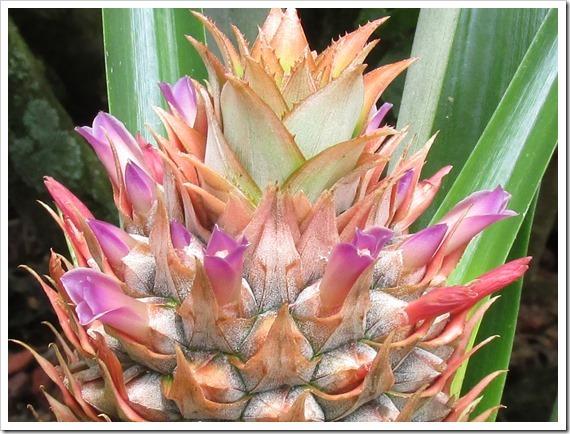 [2017-06-07-Florida-Stuart---Pineappl%5B2%5D%5B2%5D]