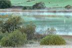 A REGARDER PASSER LES BARQUES   Pâtures autour du lac des Rousses