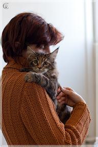 cats-show-24-03-2012-fife-spb-www.coonplanet.ru-017.jpg
