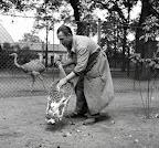 Madárgondozó a budapesti állatkertben, 1956 (Fotó: Fortepan)
