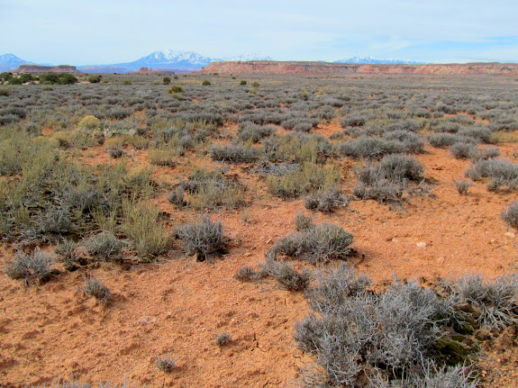 Flat, soft terrain for the 1.5-mile walk back to the Jeep