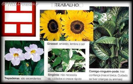O-baguá-e-as-plantas-03