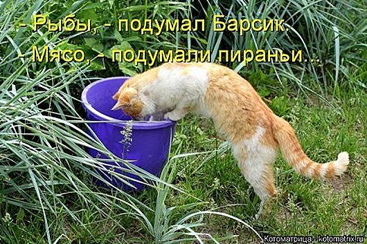 1469207164_kotomatrica-13