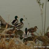 01-26-13 White Rock Lake - IMGP4328.JPG