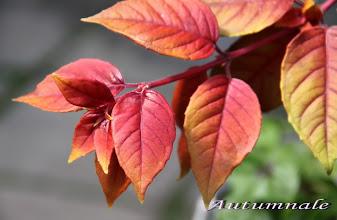 Photo: Autumnale