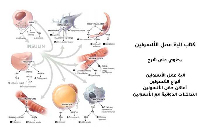 كتاب آلية عمل الأنسولين pdf