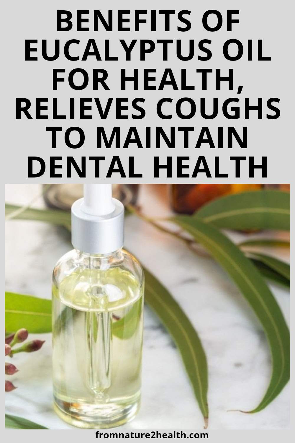Benefits of Eucalyptus Oil for Health, Relieves Coughs to Maintain Dental Health