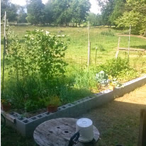 raised bed built for gardening while disabled